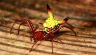 Araña Pikachú