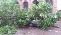Un árbol cayó sobre un auto en Arenal Grande y Nueva Palmira. Foto: Mateo Vázquez