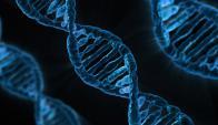 El TCGA (Atlas genómico del cáncer) es un proyecto iniciado en 2005. Foto: Pixabay