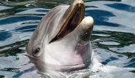 A Nana la capturaron frente a las costas de Ito en 1974 y vivía en el acuario desde entonces. Foto: Pixabay