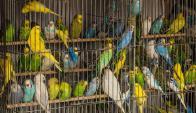 45 especies de aves están amenazadas. Foto. Pixabay