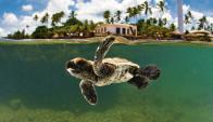 Praia do Forte fue convertida en un santuario para las tortugas.