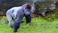 Los primates reaccionaron limpiando el alimento en al menos el 75 por ciento de las pruebas. Foto: Pïxabay
