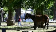 Experimento con equinos en predio de Veterinaria hicieron estallar las redes. Foto: M. Bonjour