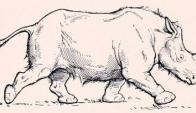 Stephanorhinus kirchbergensis