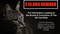 "Buscan a un ""asesino serial de animales"" en Reino Unido. Foto: @ProtectCatsLDN / Twitter."