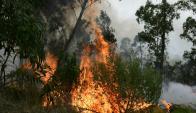 Incendio en la Ruta Interbalnearia. Foto: Marcelo Bonjour.