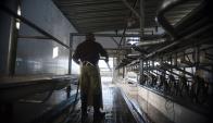 La industria láctea atraviesa una gran crisis por la caída del mercado venezolano. Foto: F. Ponzetto