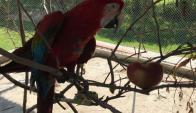 Uno de los animales incautados en mansión de Balcedo. Twitter:@alejandronario