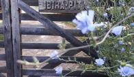 Ibirá-pitá. El  libro reúne el trabajo de Rosano en su granja agroecológica. (Foto: Gentileza Laura Rosano)