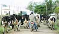 Siguen preocupando capitales extranjeros que llegan a captar leche y luego se retiran. Foto: Reuters