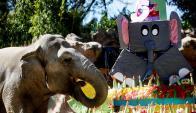 "La elefante ""Trompita"" celebró su cumpleaños. Foto: EFE"