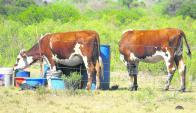 En algunas de las zonas más afectadas por la sequía las aguadas y tajamares ya se secaron. Foto: Luis Pérez