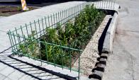 """""""Jardines de Lluvia"""" en el Municipio C. Foto: IMM"""