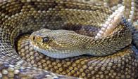 Serpiente Cascabel. Foto: Pixabay