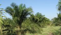 Greenpeace busca evitar la desforestación. Foto: Pixabay