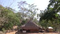 El guáimaro: un guardián ambiental nacido de la entraña de la Tierra