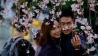 Cerezos en flor en Tokyo. Foto: AFP