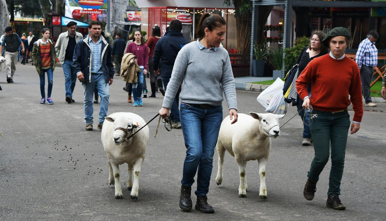 Las calles de la Expo Prado se llenan de animales. Foto: Ariel Colmegna