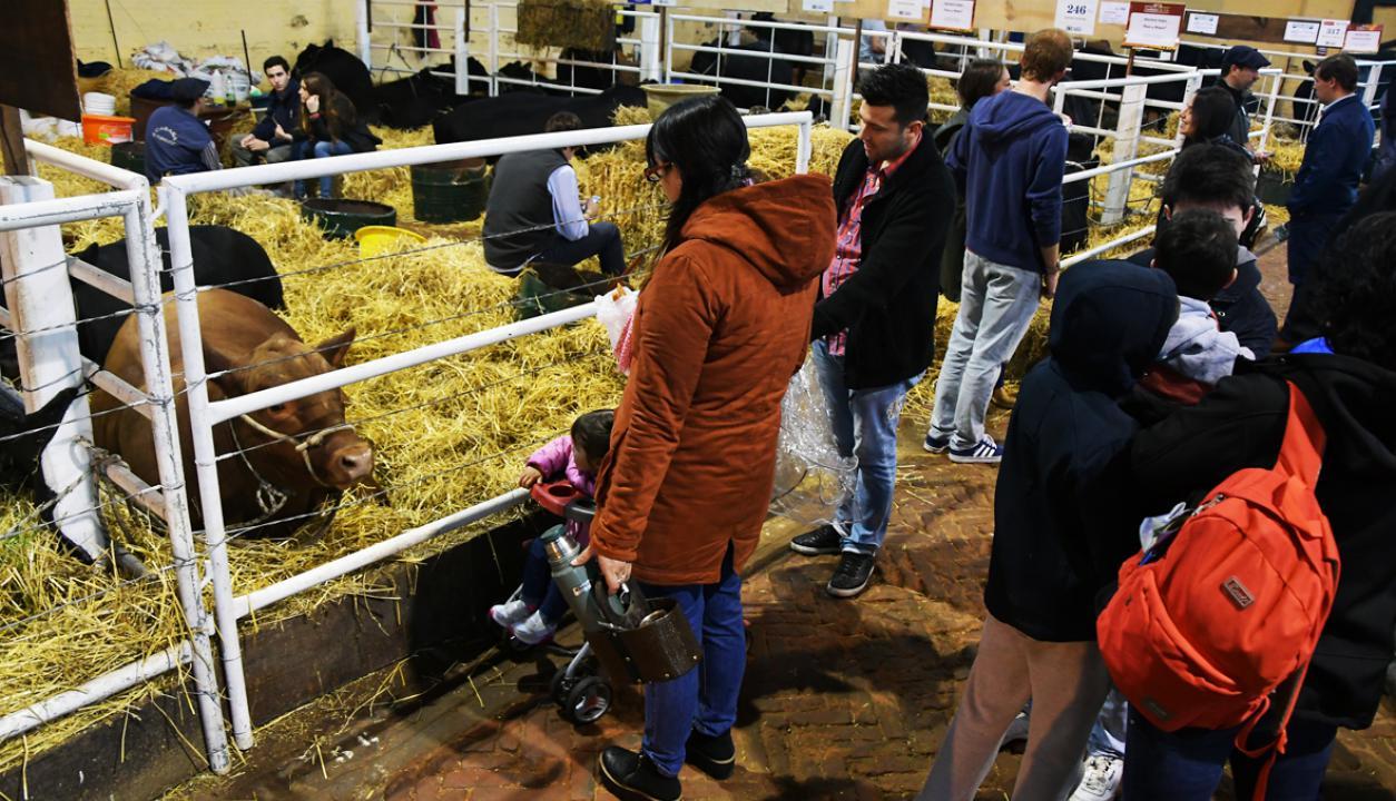 Visitantes recorren la Expo Prado. Foto: Ariel Colmegna