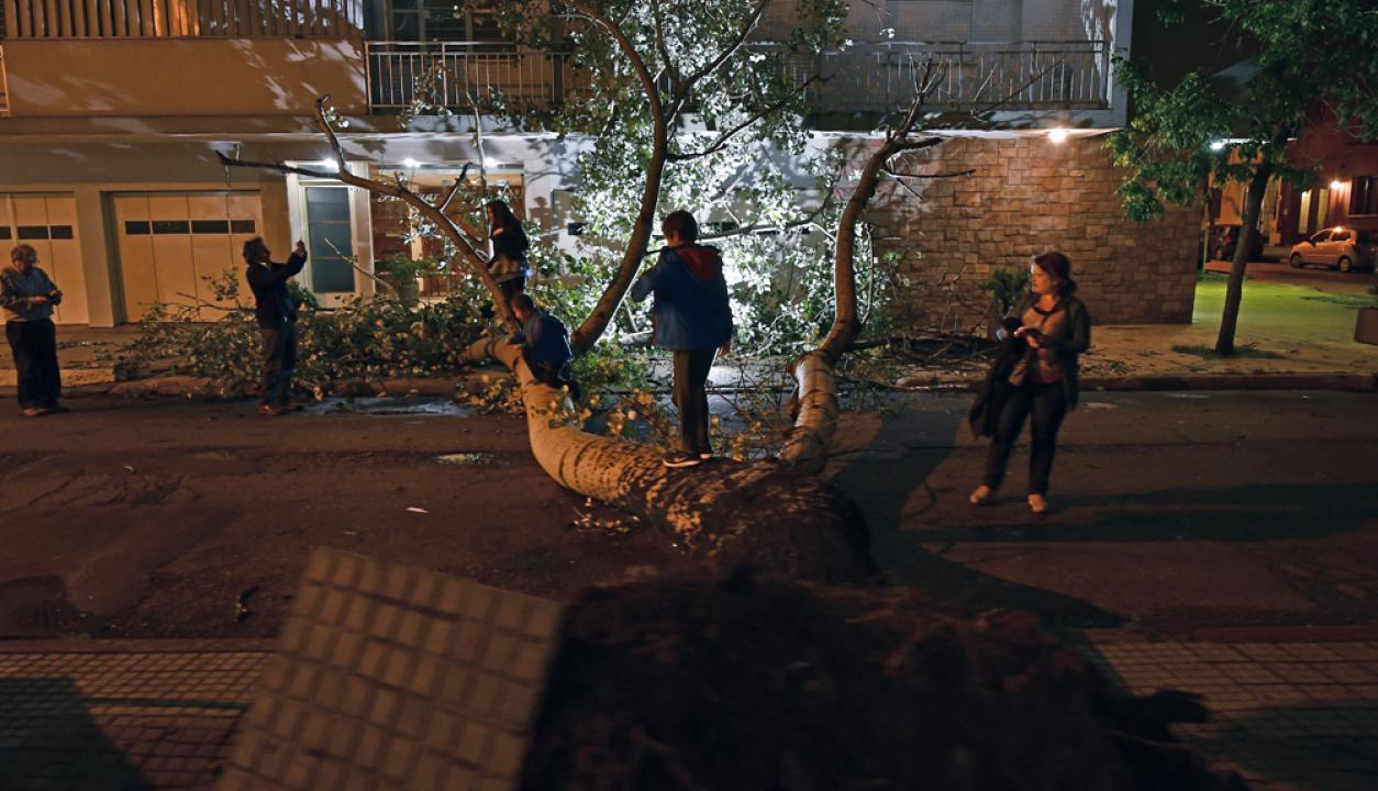 Árboles caídos en Pocitos con el temporal del jueves. Foto: Fernando Ponzetto
