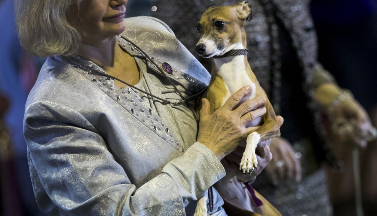 Una orgullosa dueña con su perro esperando para concursar. Foto: AFP