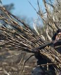Cañero trabajando en plantación en Bella Unión. Foto: Archivo El País