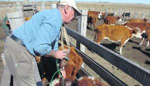 Vacunación de ganado. Foto:Archivo El País