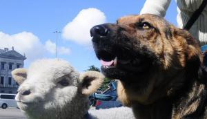 Personas preocupadas por el bienestar animal esperan ser recibidas por el intendente Martínez. Foto: F. Ponzetto