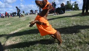 Mascotas: por ley deberán tener un microchip en su cuerpo. Foto: F. Flores