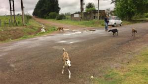 Lugar donde un hombre fue atacado por perros. Foto: Néstor Araújo.
