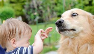 Recomiendan que la edad para tener perros sea a partir de los 4 años. Foto: iStock