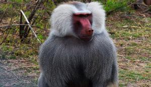 El predio del bioparque, que pasó a tener de 9 a 25 hectáreas, está compuesto de 250 especies y 500 ejemplares. Foto: Gentileza Intendencia de Durazno