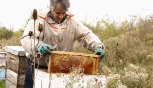 Apicultor trabajando en una colmena de miel. Foto: Faustina Bartaburu