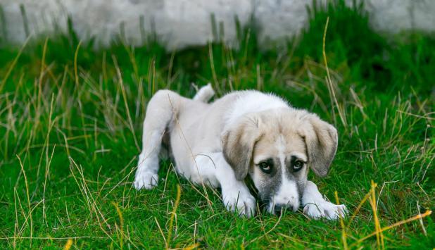 Perro. Foto: Pixabay