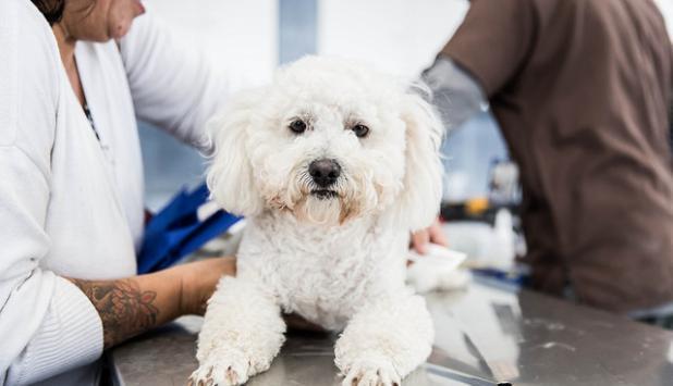 Perro en veterinaria. Foto: Flickr