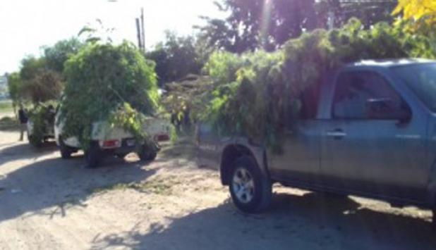 El hombre tenía 90 plantas de cannabis en el fondo de su casa. Foto: Ministerio del Interior.