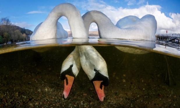 Tórtolos, categoría gran angular. Lago Lomond de Escocia. Foto: Grant Thomas/UPY 2018